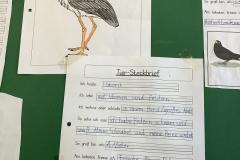 Der-Storch